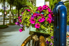 Велосипед с цветками Стоковое Фото