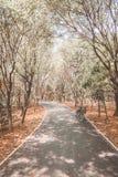 Велосипеды в парке Стоковая Фотография