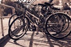 Велосипеды в шкафах велосипеда Стоковые Фотографии RF