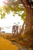 Велосипеды припаркованные под деревьями стоковое изображение