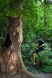 Велосипеды человека в зеленом лесе Стоковые Фотографии RF