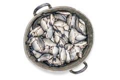 Ведро вполне рыб Стоковые Фото