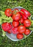 Ведро с овощами на траве Стоковые Фотографии RF