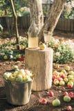 Ведро яблок в саде, вертикальном orientaion Стоковые Изображения