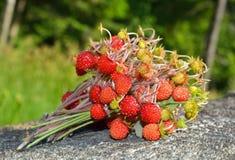 ведро bushes клубника одичалая Стоковое Изображение RF