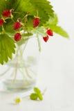 ведро bushes клубника одичалая Стоковое фото RF
