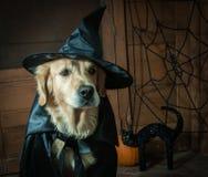 Ведьма Holloween Стоковые Изображения