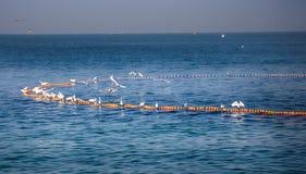 Взаимодействие маленьких белых egrets и индийских fishermens Стоковое Изображение