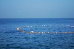 Взаимодействие маленьких белых egrets и индийских рыболовов Стоковые Фотографии RF