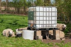 Взаимо- посредничанный контейнер для навалочных грузов как гостиница овец Стоковые Фотографии RF