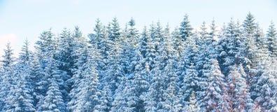 Взаимо- текстура предпосылки каникул при сосны покрытые сильным снегопадом Стоковые Фото