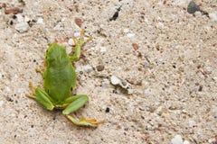 взбираясь вал лягушки Стоковое Фото
