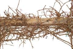 взбираясь лозы загородки деревянные Стоковое Изображение RF