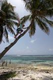 взбираясь пальма человека Стоковое Фото