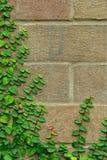 взбираясь стена вала Стоковые Изображения