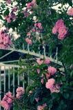 Взбираясь шпалера роз, красивый фронт загородки дома Стоковые Изображения