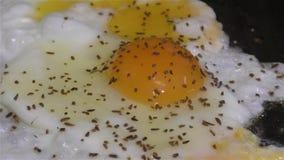 Взбитые яйца и специи видеоматериал