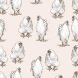 взводит курок курицам Стоковая Фотография
