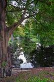 Взгляды деревьев и уникальных аспектов природы окружая Новый Орлеан, включая зеркальные пруды в кладбищах и районе сада стоковые фотографии rf