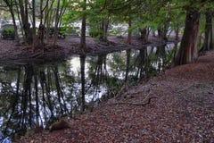 Взгляды деревьев и уникальных аспектов природы окружая Новый Орлеан, включая зеркальные пруды в кладбищах и районе сада стоковое фото rf