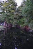 Взгляды деревьев и уникальных аспектов природы окружая Новый Орлеан, включая зеркальные пруды в кладбищах и районе сада стоковые изображения
