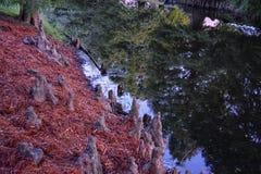 Взгляды деревьев и уникальных аспектов природы окружая Новый Орлеан, включая зеркальные пруды в кладбищах и районе сада стоковые фото