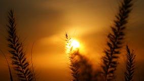 Взгляды захода солнца от холма сигнала в Кейптауне, Южной Африке стоковая фотография