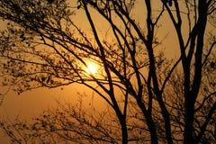 Взгляды захода солнца через деревья стоковые изображения rf