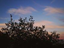 взгляды захода солнца стоковая фотография rf