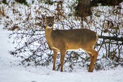 Взгляды зимы Канады стоковые фото