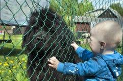 взгляды малыша Стоковая Фотография RF
