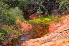 Взгляды от более низкого следа бухты песка к образованию вортекса, парком штата каньона снега в консервации Ar красных скал нацио стоковая фотография rf
