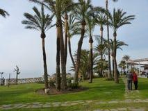 Взгляды пляжа в Испании с пальмами Стоковая Фотография RF