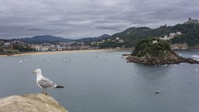 Взгляды пляжа раковины Стоковые Изображения RF