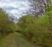 Взгляды природы и троп вдоль Greenway дн Shelby и естественных следов frontage Рекы Cumberland зоны, hardw bottomland стоковая фотография