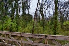 Взгляды природы и троп вдоль Greenway дн Shelby и естественных следов frontage Рекы Cumberland зоны, hardw bottomland стоковые фото