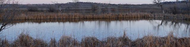 Взгляды с пути следа Cradleboard идя на заповеднике Кэролин Holmberg в Broomfield Колорадо окруженном Cattails, дикими стоковые изображения