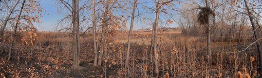 Взгляды с пути следа Cradleboard идя на заповеднике Кэролин Holmberg в Broomfield Колорадо окруженном Cattails, дикими стоковое изображение