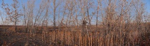 Взгляды с пути следа Cradleboard идя на заповеднике Кэролин Holmberg в Broomfield Колорадо окруженном Cattails, дикими стоковые изображения rf