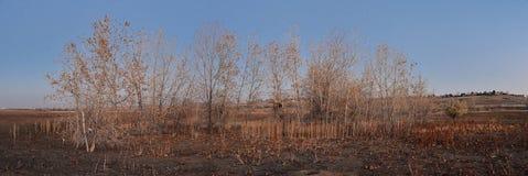 Взгляды с пути следа Cradleboard идя на заповеднике Кэролин Holmberg в Broomfield Колорадо окруженном Cattails, дикими стоковые фотографии rf