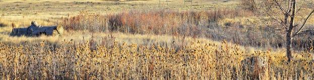 Взгляды с пути следа Cradleboard идя на заповеднике Кэролин Holmberg в Broomfield Колорадо окруженном Cattails, дикими стоковое фото