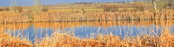 Взгляды с пути следа Cradleboard идя на заповеднике Кэролин Holmberg в Broomfield Колорадо окруженном Cattails, дикими стоковое фото rf