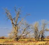 Взгляды с пути следа Cradleboard идя на заповеднике Кэролин Holmberg в Broomfield Колорадо окруженном Cattails, дикими стоковая фотография