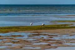 Взгляды Tampa Bay воды стоковая фотография rf