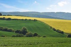 Взгляд аграрного ландшафта с полем рапса и пшеницей стоковое фото