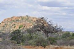 взгляд Африки Кении стоковые фотографии rf