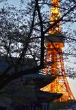 Взгляд башни и виска токио стоковые фотографии rf