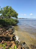 Взгляд бечевника реки в Fort Myers, Флориде, США Стоковые Фотографии RF