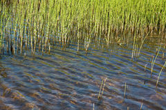 взгляд болотоа Стоковые Фото