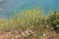 Взгляд бухты от обочины с желтыми Wildflowers на переднем плане Стоковые Фото
